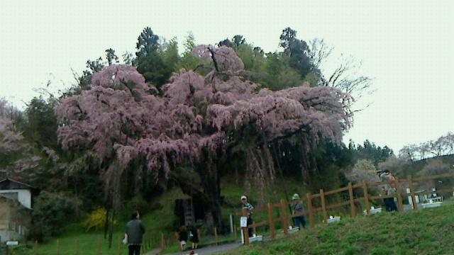 福島は花繚乱です!