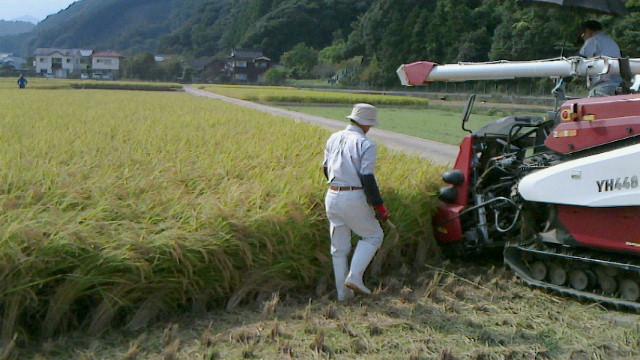 ひょうたん米の稲刈りです。