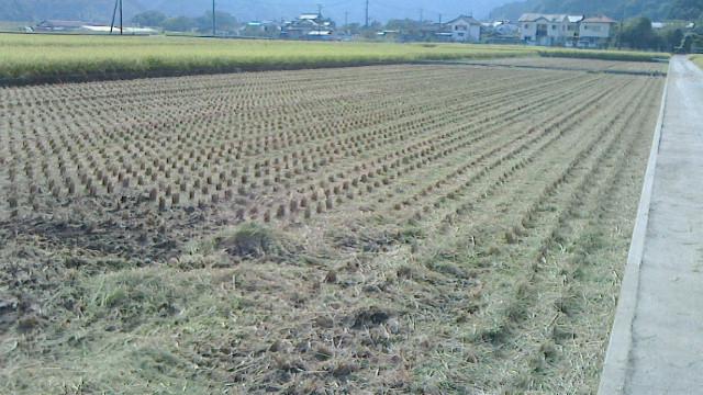 稲刈り終了