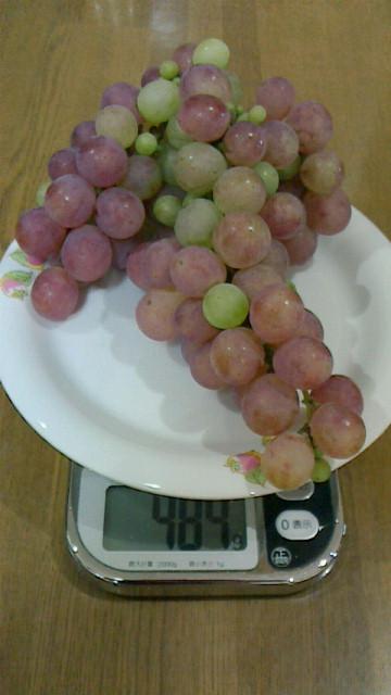 葡萄の一房484g